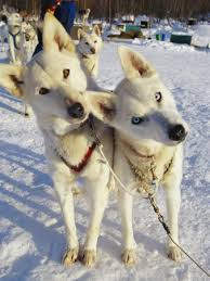 dogs with two heads