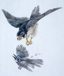 raptor bird of prey