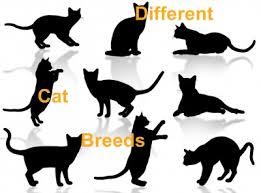 all cat types