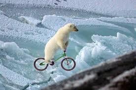 polar bear motorcycle
