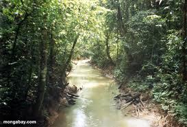 peruvian amazon rainforest