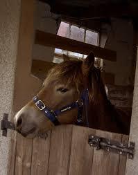 pony stable