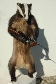 badger stuffed
