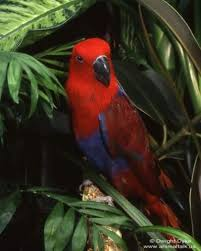 pictures of tropical birds