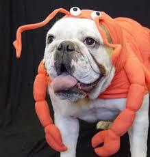 bulldog costumes