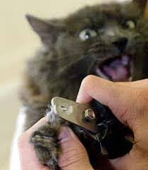 declaw cats