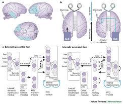 posterior temporal lobe