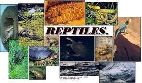 clases de reptiles