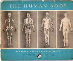 picture of inside human body