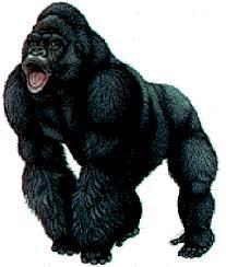 ape images