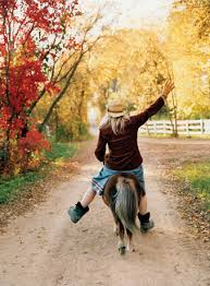 riding miniature horses