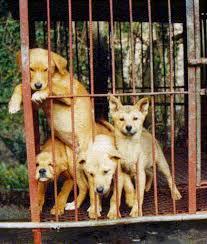 perros de venta