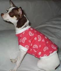 chihuahua dress