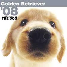 golden retriever calendar