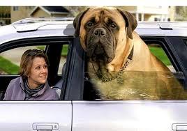 big dog types