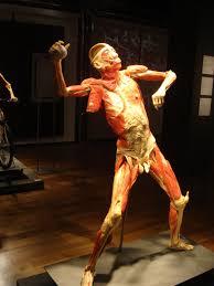 bodies exhibits