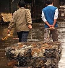 china animals