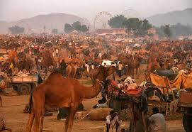 pushkar fair 2009