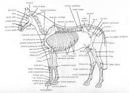 horses bones