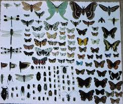 kinds of insects
