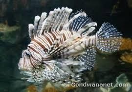 animals coral reefs