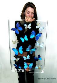 butterfly displays