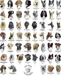 dog breeds with picture