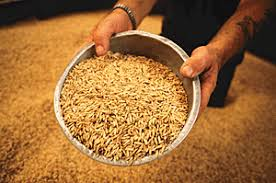 gm seeds