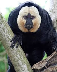 animales de venezuela