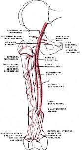 arterial vein