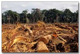 deforestation south america