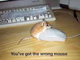 images of mouses