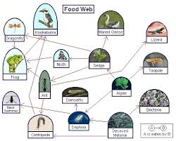 food web pictures