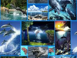 dolphin background pictures