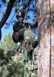 tree climbing device