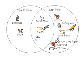 animals north pole