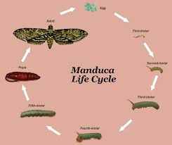 life cycle insects