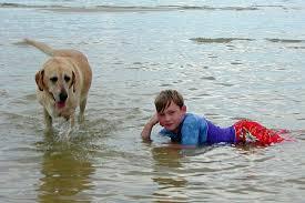 life saving dogs