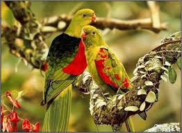 pictures of love birds