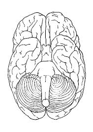coloring pictures of the brain