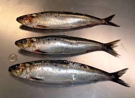 افيد 9 اكلات لقلبك ولبشرتك sardines.jpg