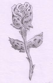 drawings of a rose