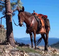 mule picture