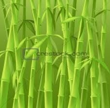 bamboo trees pictures
