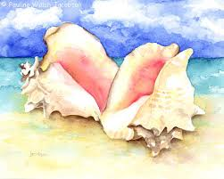 conch shells pictures
