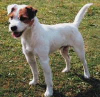 jack parson russell