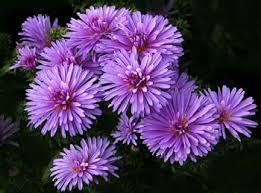 flowers in september