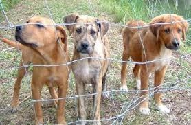 animal shelters dog