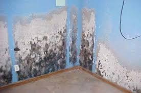 house molds