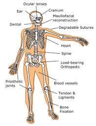 labeled body diagram